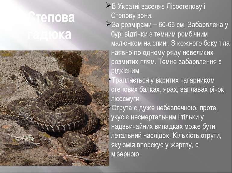 Степова гадюка В Україні заселяє Лісостепову і Степову зони. За розмірами – 6...