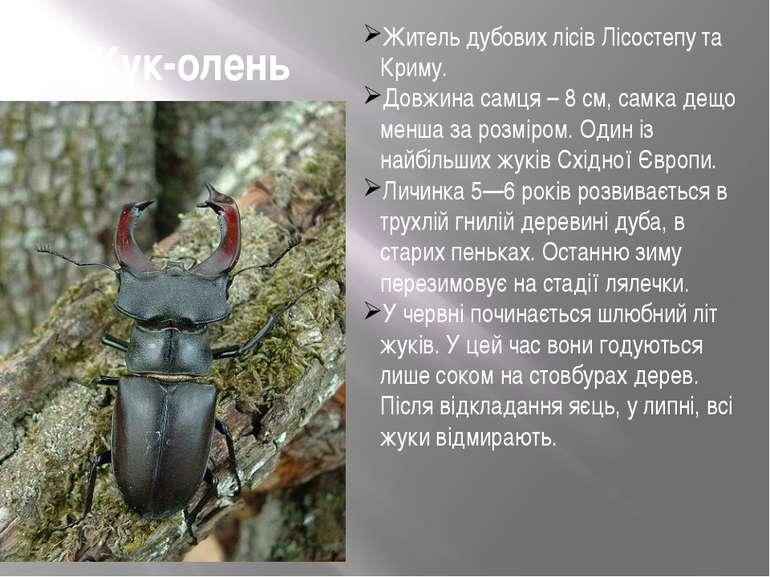 Жук-олень Житель дубових лісів Лісостепу та Криму. Довжина самця – 8 см, самк...