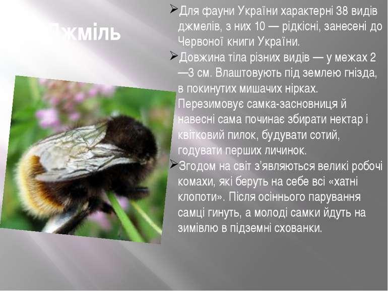 Джміль Для фауни України характерні 38 видів джмелів, з них 10 — рідкісні, за...