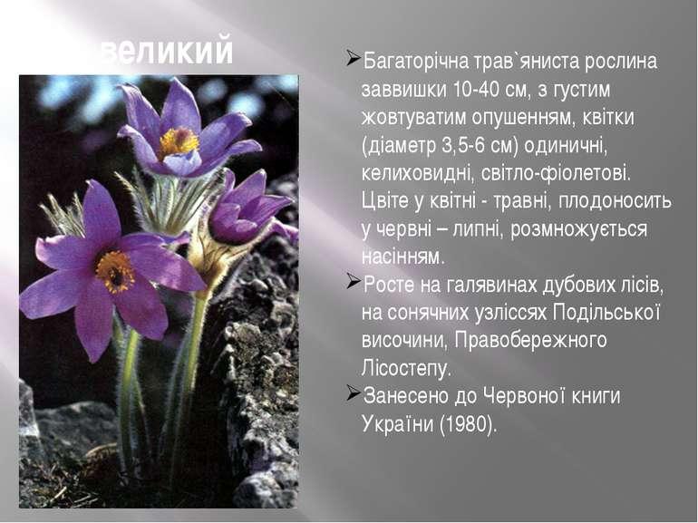 Сон великий Багаторічна трав`яниста рослина заввишки 10-40 см, з густим жовту...