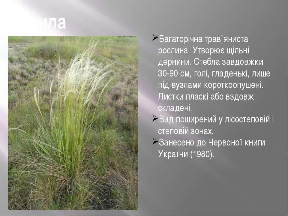 Ковила Багаторічна трав`яниста рослина. Утворює щільні дернини. Стебла завдов...