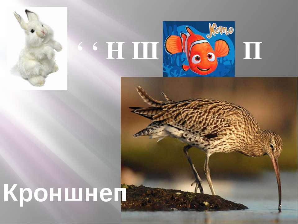 ' ' ' Н Ш П Кроншнеп