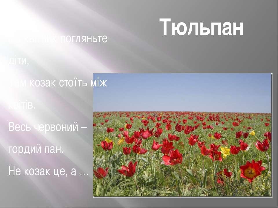 Тюльпан На квітник погляньте діти, Там козак стоїть між квітів. Весь червоний...