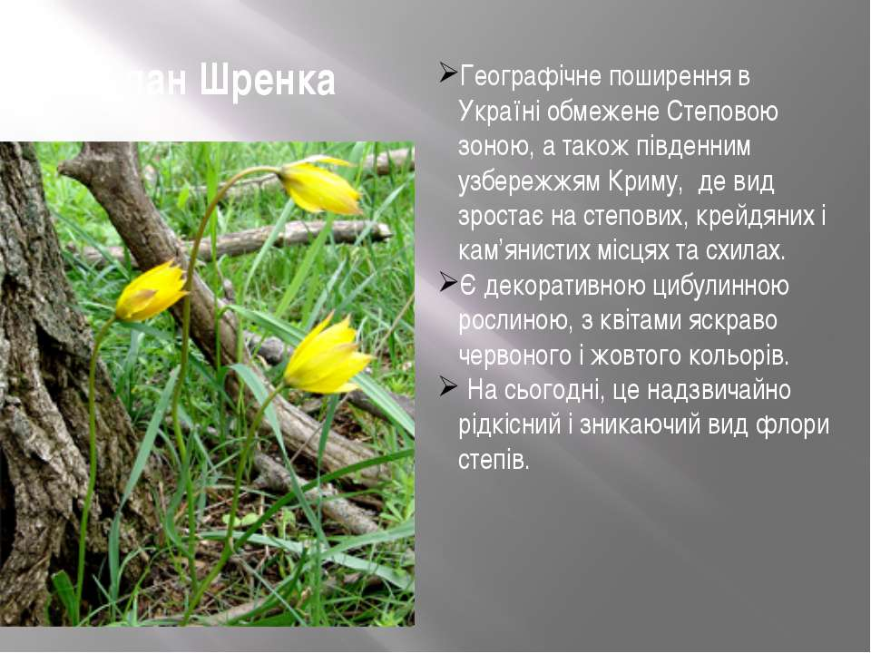 Тюльпан Шренка Географічне поширення в Україні обмежене Степовою зоною, а так...