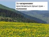 За чагарниками простягаються гірські луки – полонини