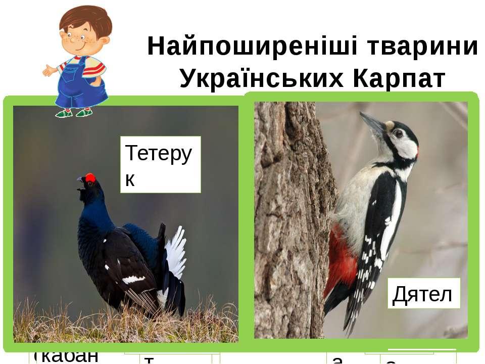 Найпоширеніші тварини Українських Карпат Благородний олень Білка Бабак Їжак Д...