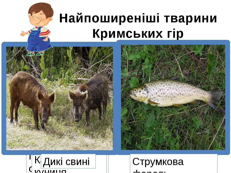 Найпоширеніші тварини Кримських гір Плямистий олень Дикий голуб Орел-білохвіс...