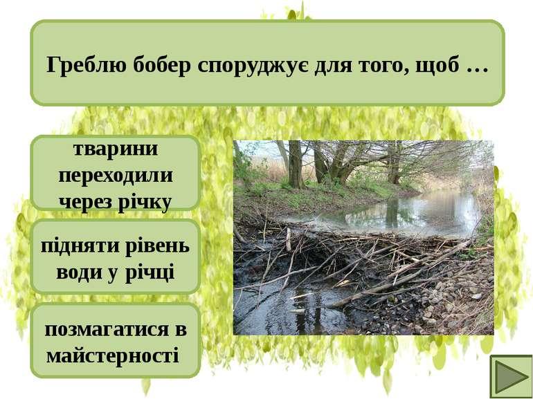 тварини переходили через річку підняти рівень води у річці позмагатися в майс...
