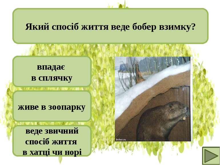 веде звичний спосіб життя в хатці чи норі живе в зоопарку впадає в сплячку Як...
