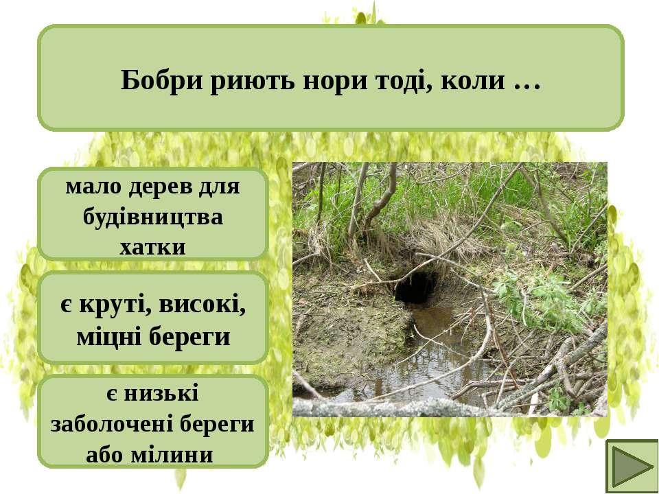 мало дерев для будівництва хатки є круті, високі, міцні береги є низькі забол...