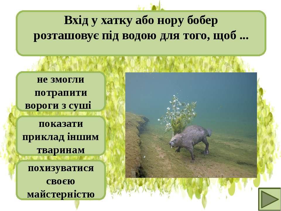 не змогли потрапити вороги з суші показати приклад іншим тваринам похизуватис...