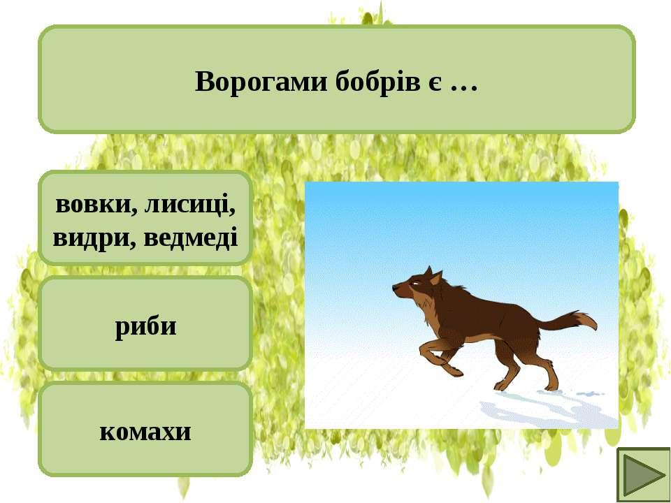 вовки, лисиці, видри, ведмеді риби комахи Ворогами бобрів є …
