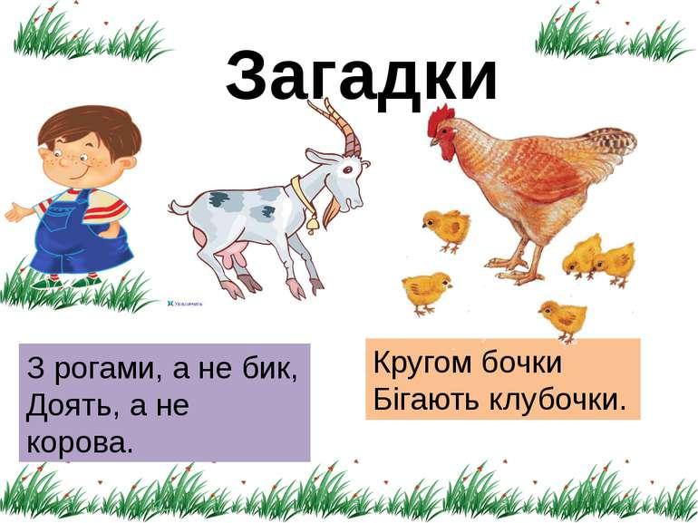 Загадки З рогами, а не бик, Доять, а не корова. Кругом бочки Бігають клубочки.