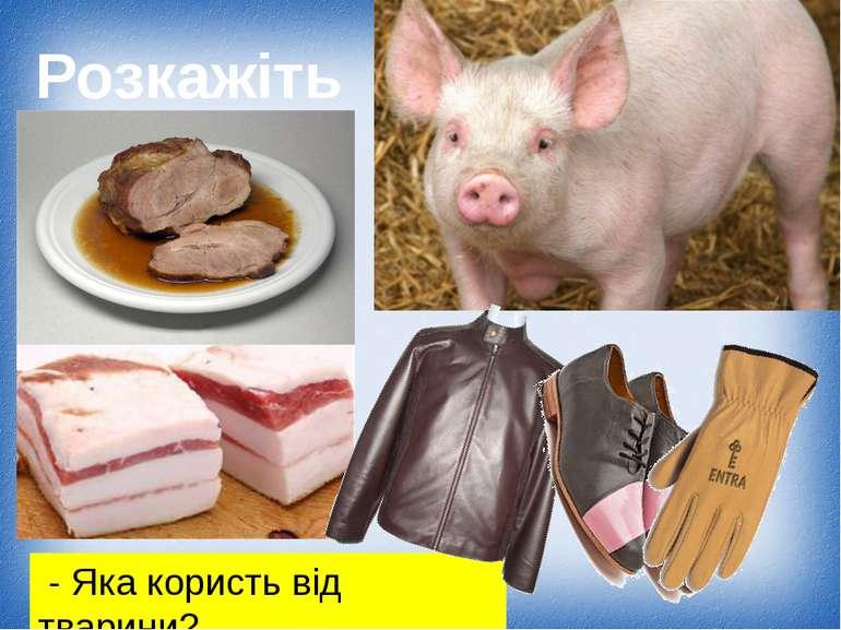 Свійські тварини рідного краю - презентація з природознавства