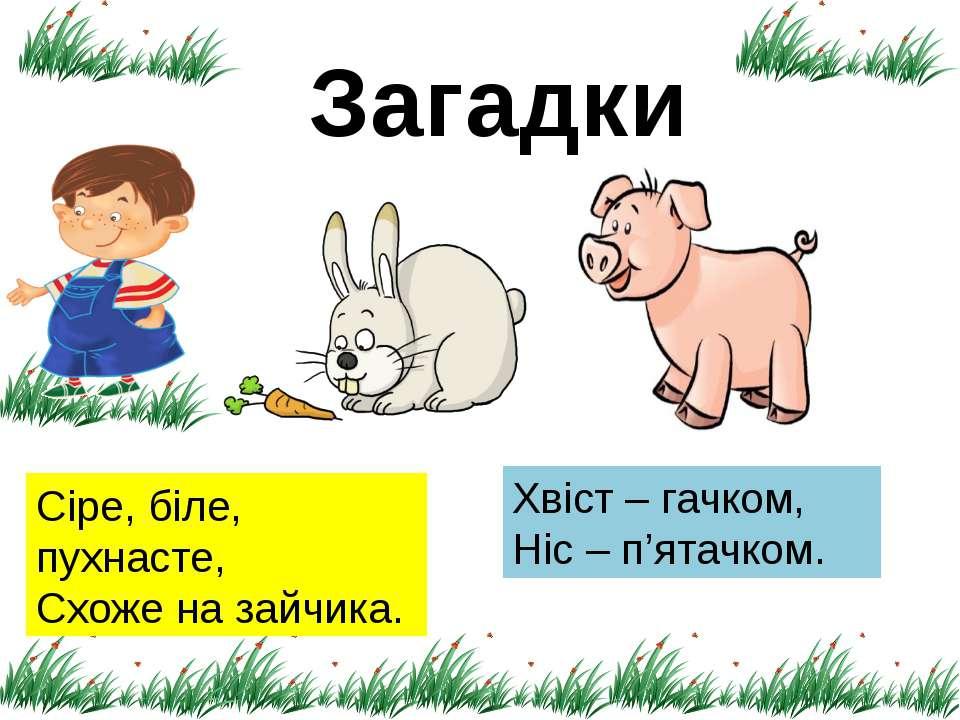 Загадки Сіре, біле, пухнасте, Схоже на зайчика. Хвіст – гачком, Ніс – п'ятачком.