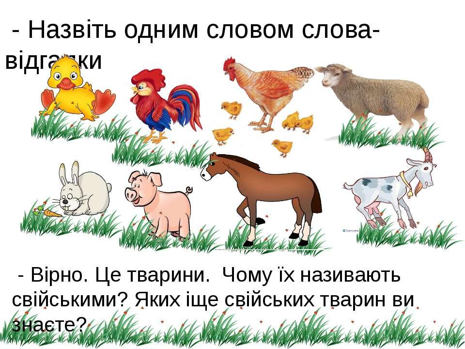 - Назвіть одним словом слова-відгадки - Вірно. Це тварини. Чому їх називають ...