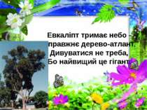 Евкаліпт тримає небо - Справжнє дерево-атлант. Дивуватися не треба, Бо найвищ...