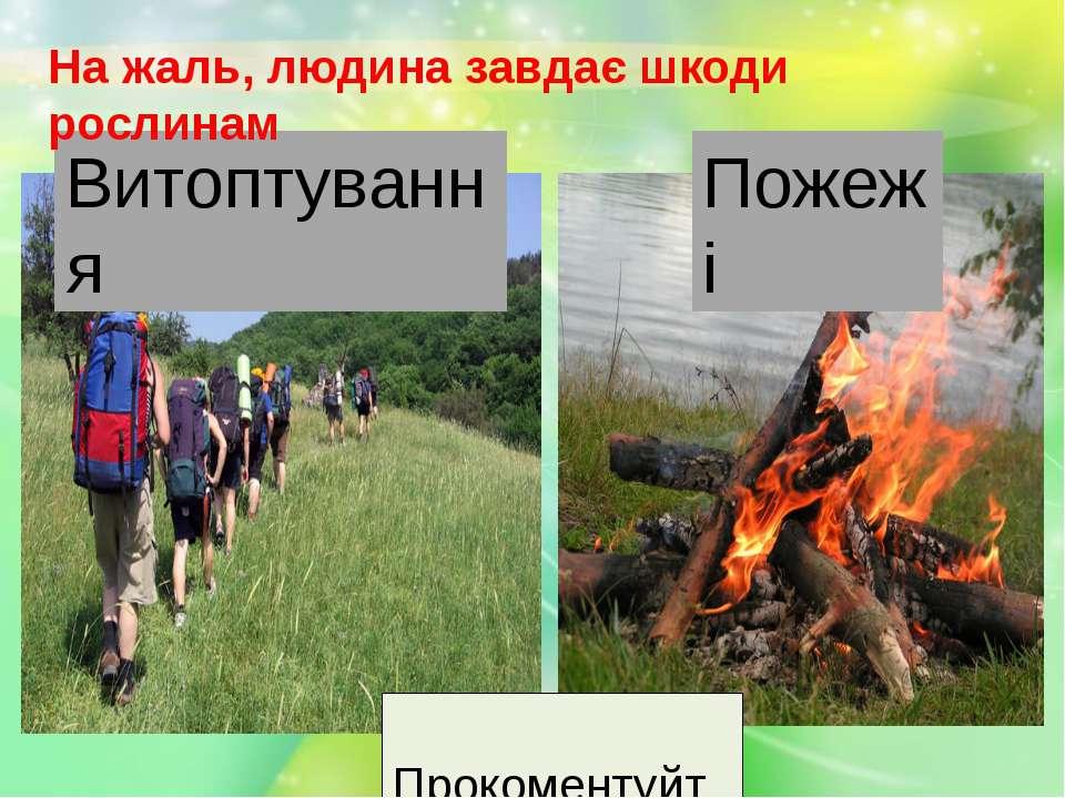 Витоптування На жаль, людина завдає шкоди рослинам Пожежі Прокоментуйте