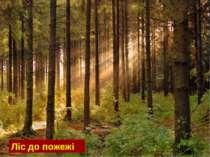 Ліс до пожежі