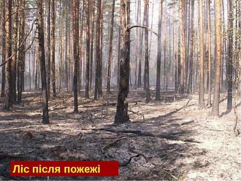 Ліс після пожежі