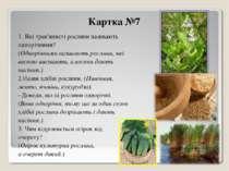 Картка №7 1. Які трав'янисті рослини називають однорічними? (Однорічними нази...