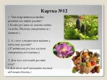 Картка №12 1. Чим відрізняються хвойні рослини від інших рослин? ( Хвойні рос...