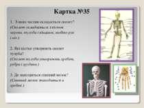 Картка №35 1. З яких частин складається скелет? (Скелет складається з кісток ...