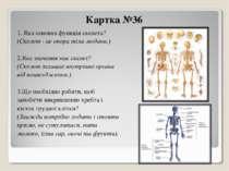 Картка №36 1. Яка основна функція скелета? (Скелет - це опора тіла людини.) 2...
