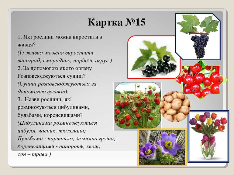 Картка №15 1. Які рослини можна виростити з живця? (Із живця можна виростити ...
