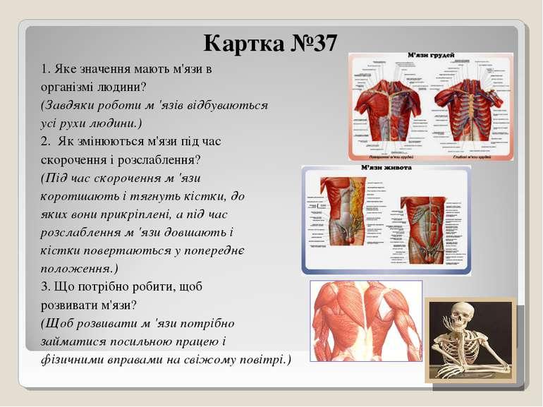 Картка №37 1. Яке значення мають м'язи в організмі людини? (Завдяки роботи м ...