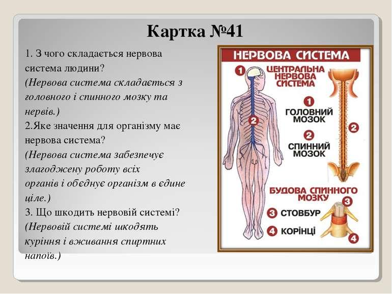 Картка №41 1. З чого складається нервова система людини? (Нервова система скл...