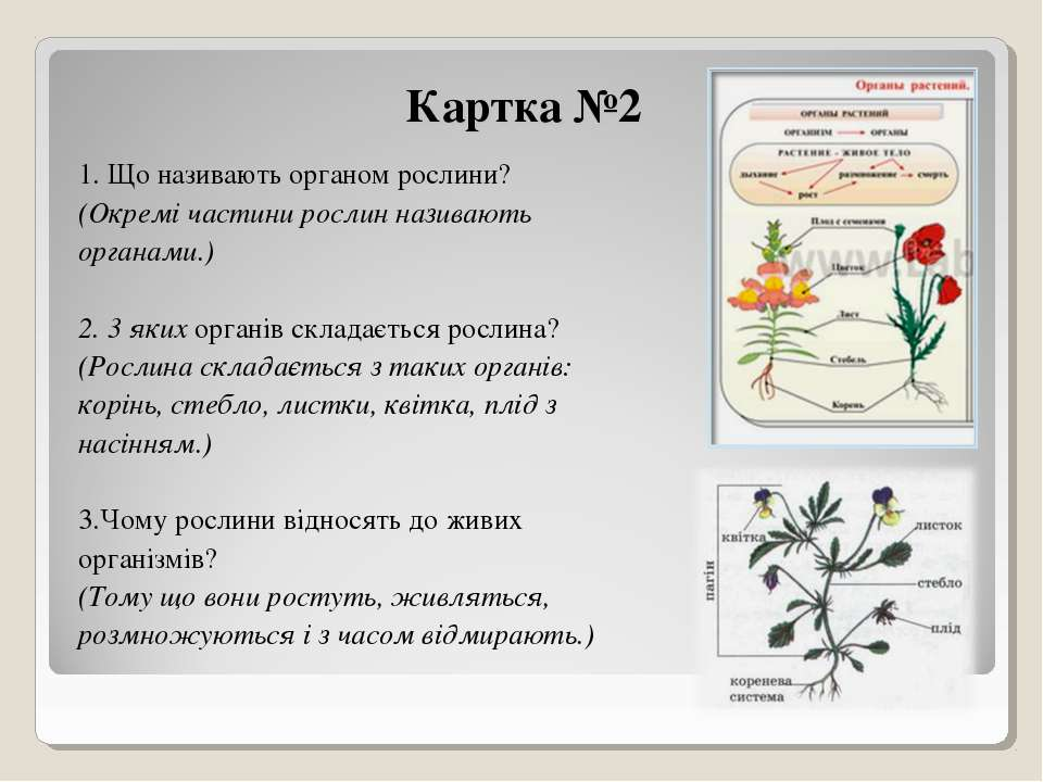 Картка №2 1. Що називають органом рослини? (Окремі частини рослин називають о...