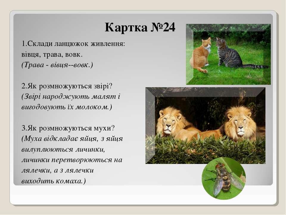 Картка №24 1.Склади ланцюжок живлення: вівця, трава, вовк. (Трава - вівця--во...