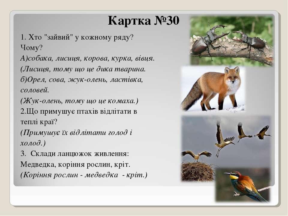 """Картка №30 1. Хто """"зайвий"""" у кожному ряду? Чому? А)собака, лисиця, корова, ку..."""