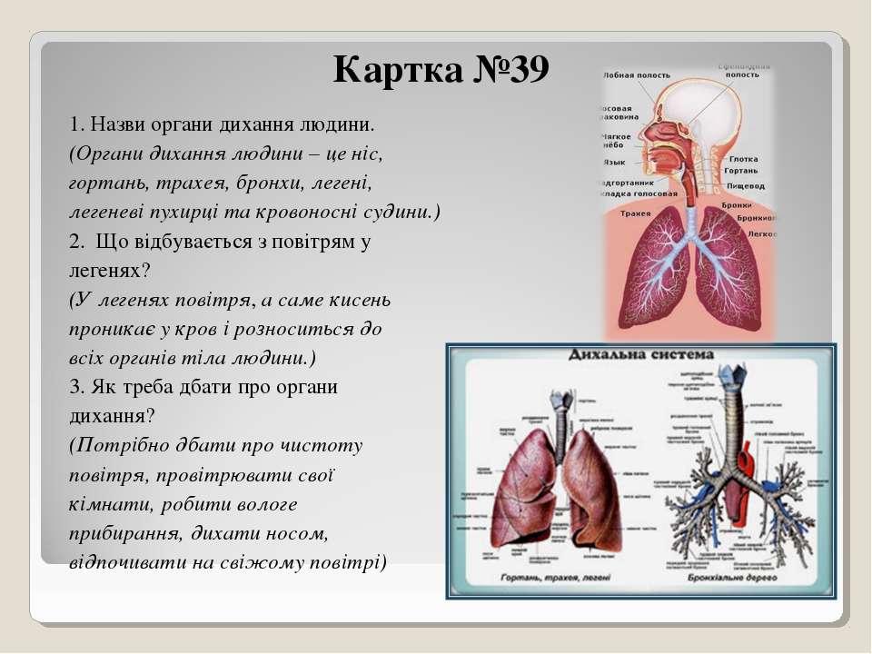 Картка №39 1. Назви органи дихання людини. (Органи дихання людини – це ніс, г...