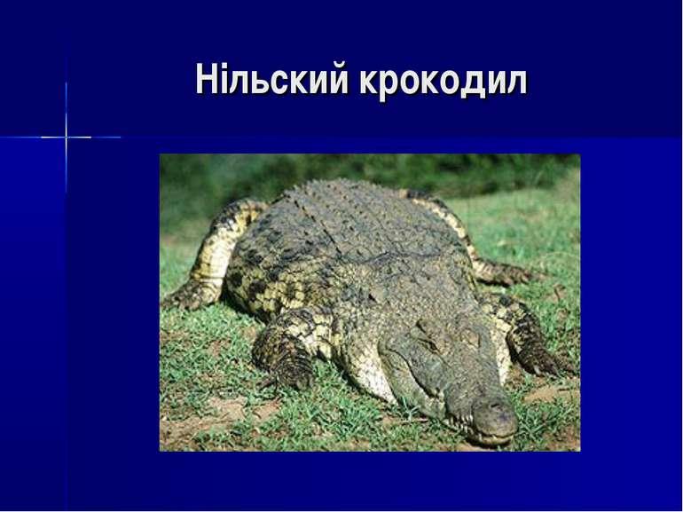 Нільский крокодил