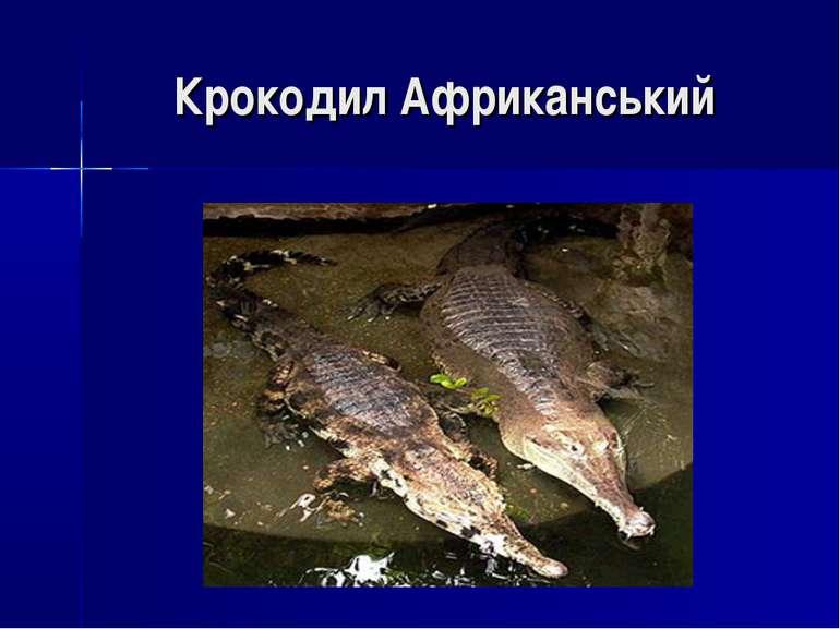 Крокодил Африканський