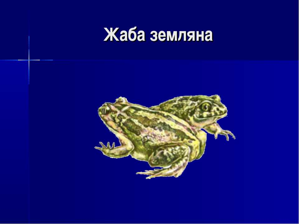 Жаба земляна