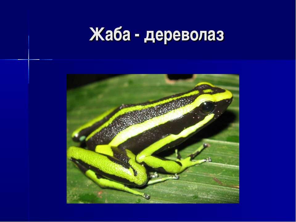 Жаба - дереволаз