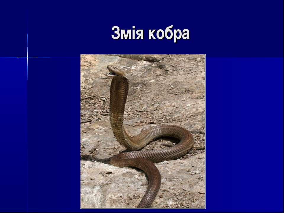 Змія кобра