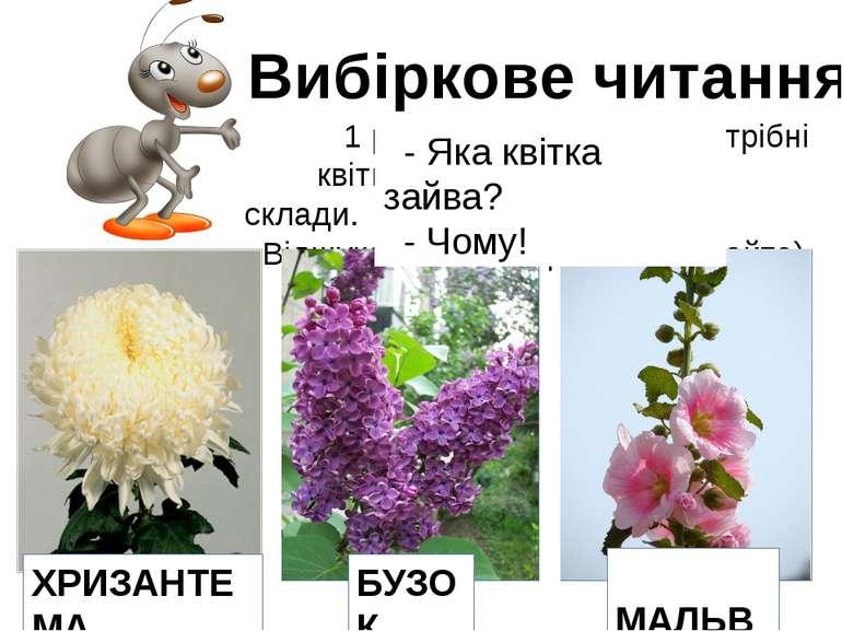 Вибіркове читання 1 ряд – для Мурашки. Потрібні квіти, назви яких мають 2 скл...