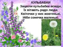 КУЛЬБАБКИ Зацвіли кульбабки всюди, Їх вітають радо люди. Квіточки у них жовте...