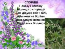 СПОРИШ Побіжу і накошу Молодого споришу. Дам дідусю квіти білі, Аби ноги не б...