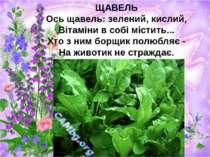 ЩАВЕЛЬ Ось щавель: зелений, кислий, Вітаміни в собі містить... Хто з ним борщ...