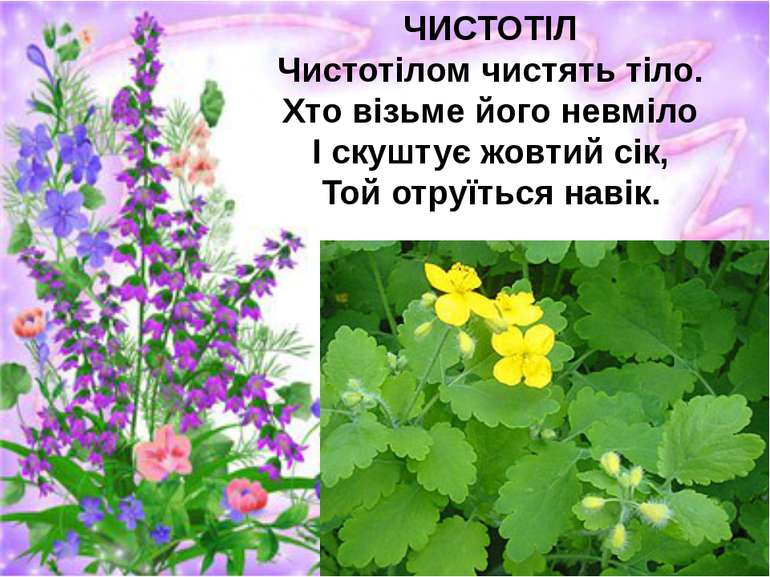 ЧИСТОТІЛ Чистотілом чистять тіло. Хто візьме його невміло І скуштує жовтий сі...