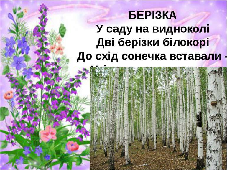БЕРІЗКА У саду на видноколі Дві берізки білокорі До схід сонечка вставали - У...