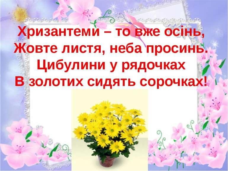 Хризантеми – то вже осінь, Жовте листя, неба просинь. Цибулини у рядочках В з...