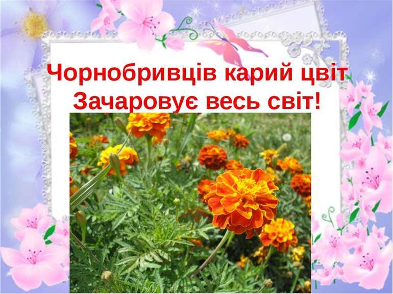 Чорнобривців карий цвіт Зачаровує весь світ!