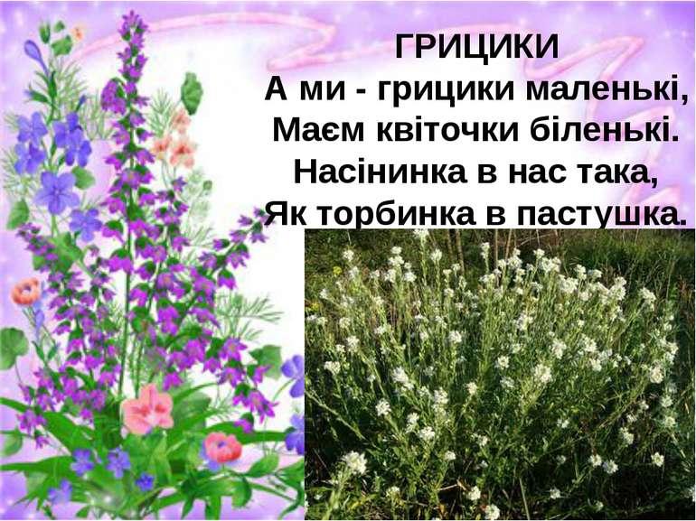 ГРИЦИКИ А ми - грицики маленькі, Маєм квіточки біленькі. Насінинка в нас така...