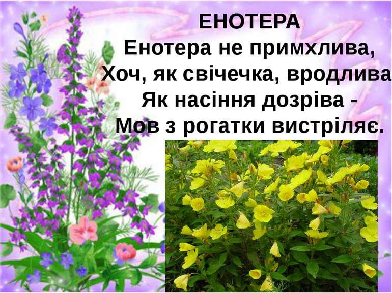 ЕНОТЕРА Енотера не примхлива, Хоч, як свічечка, вродлива. Як насіння дозріва ...